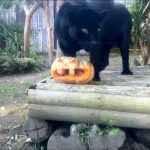 Il week end 30 e 31 ottobre e lunedì 1 novembre Halloween allo Zoo di Napoli